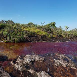 Colombia-Cano-Cristales-rivier-kleuren