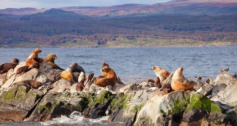 Argentinie-Ushuaia-Seal-Island-Beagle-Channel