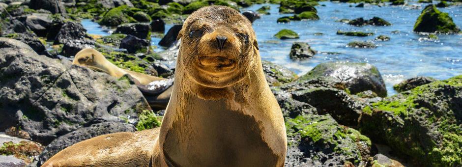 Galapagos-San-Cristobal-zeehond_2_525672
