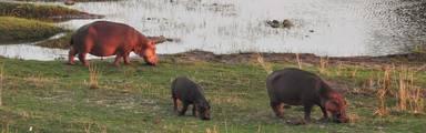 Tips voor een bezoek aan het Krugerpark