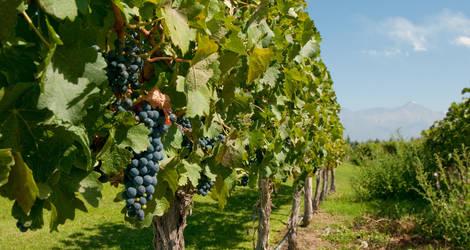 Argentinie-Mendoza-Wijngaarden