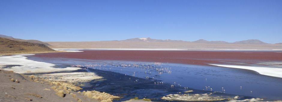 Het meer in Uyuni kleurt roze van de flamingo's - Bolivia