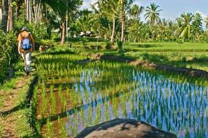 Indonesie-Lombok-wandelen-sawah