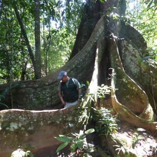 De gids vertelt over de flora in Madidi National Park - Bolivia