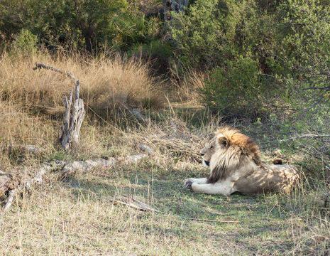 Botswana-Moremi-Wildlife-Reserve35