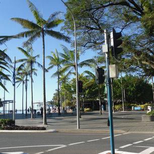 Australie-Cairns-palmbomen