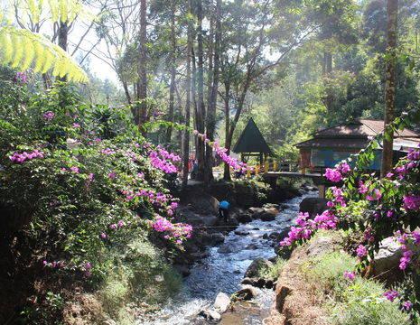 Java-Malang-Botanische-tuin