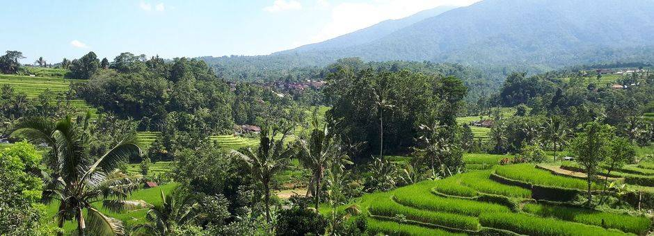 indonesie-java-nagrak-rijstvelden_2_452428