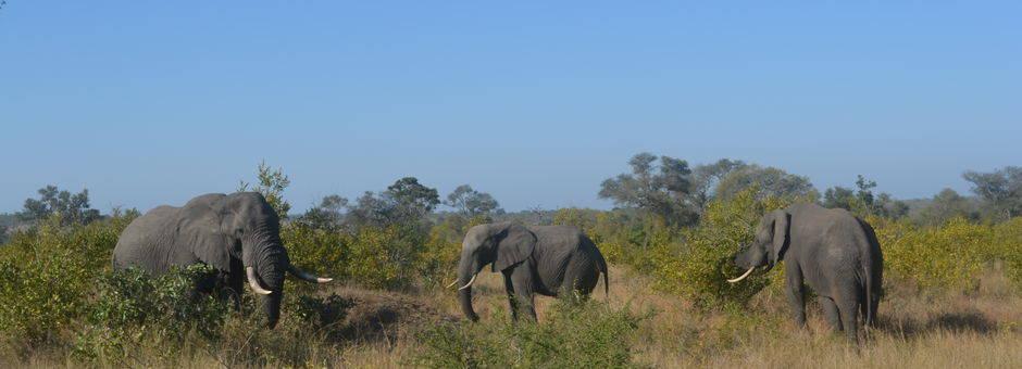 Krugerpark wildleven (12)