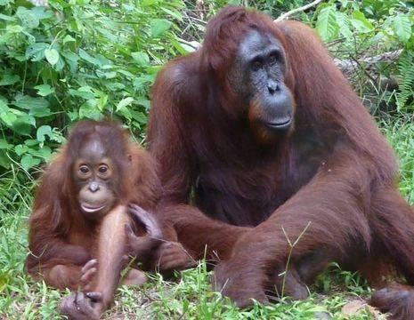 Indonesie-Kalimantan-tanjungputih-moeder-jong