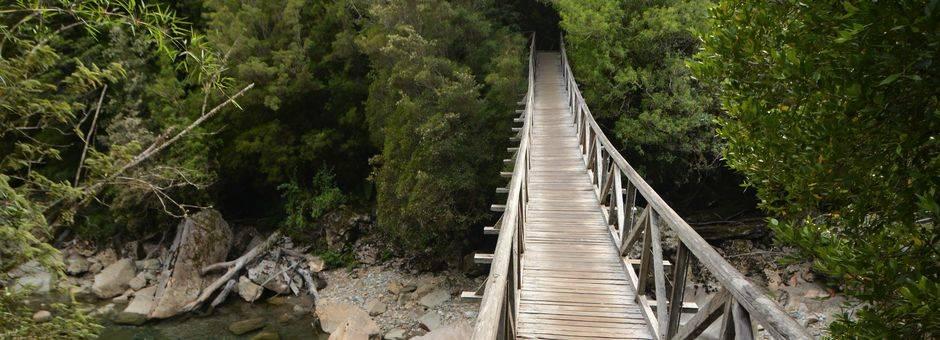 Chili-Pumalin-National-Park_1_429957