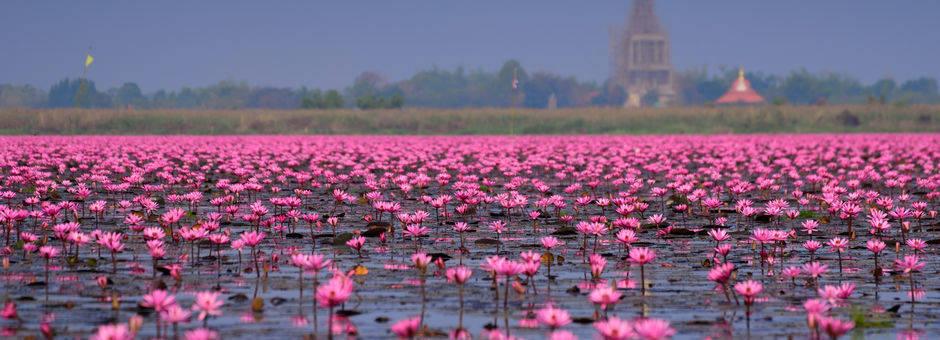 Thailand-lotus251(13)