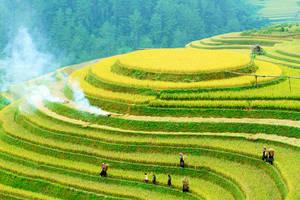 Bouwstenen Vietnam