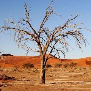 Namibie-Kalahari-Woestijn-1