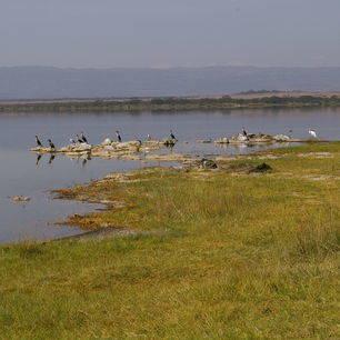 Kenia-Lake-Elementaita-Vogels_1_391021