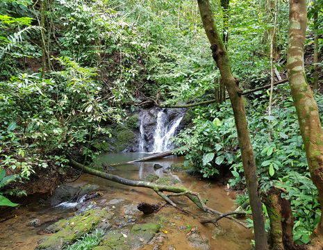 Colombia-Nuqui-jungle