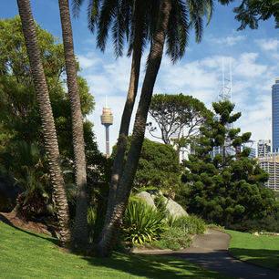 Australie-Sydney-botanische-tuinen_1_559961