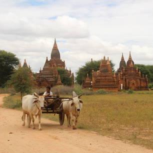 Myanmar-Bagan-ossenwagen(8)