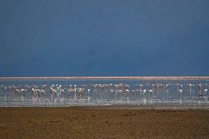 Lake Manyara & Tarangire