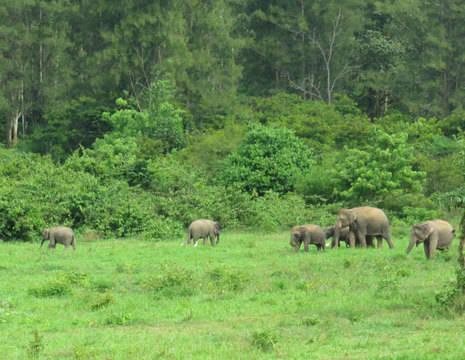 Olifanteni-in-het-wild-in-Kuiburi-NP