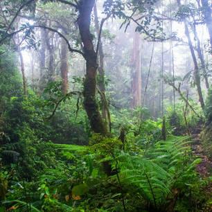 Monteverde-15-hike_mini(10)
