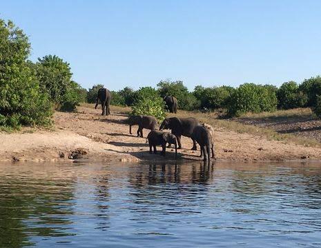 Botswana-Chobe-Olifanten2_1_365118