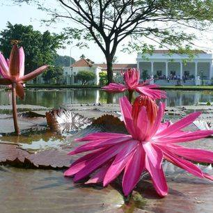 Indonesie.Java-Bogor-Buitenzorg.JPG_1_102435