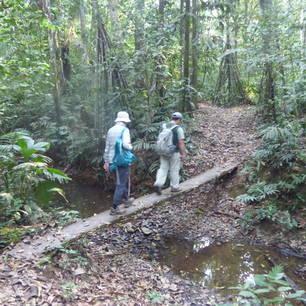 Niet alleen over de makkelijke paden in Madidi National Park - Bolivia