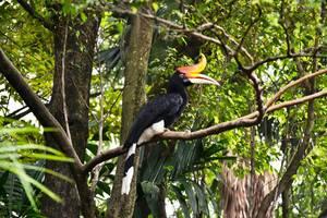 Vogels in Vietnam