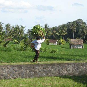 Indonesie-Bali-Blayu-draagster