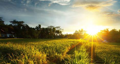 Indonesie-Bali-Rijstveld-Zonsopgang-1_1_473427