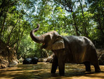Kulen Elephant Forest