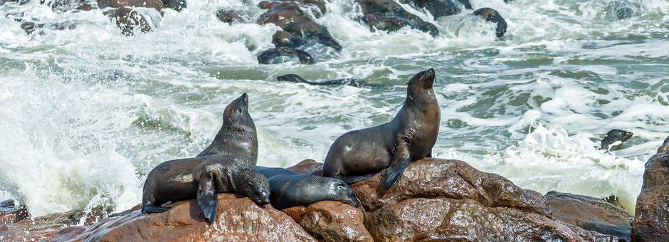 Namibie-CapeCross-zeehondenkolonie1(11)