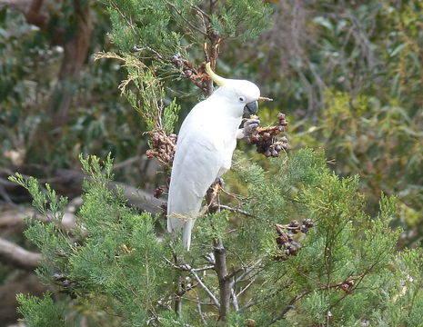 Australie-Grampians-National-Park-vogel