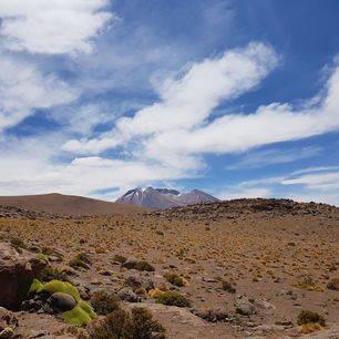 Bolivia-Uyuni-droge-vlaktes-en-mos_1_362691