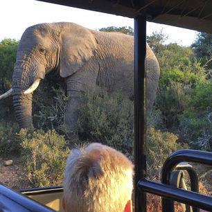 Zuid-Afrika-Olifantensafari_2_349238
