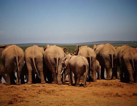 Zuid-Afrika-Addo-Olifanten
