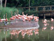 Vogelparadijs Barú