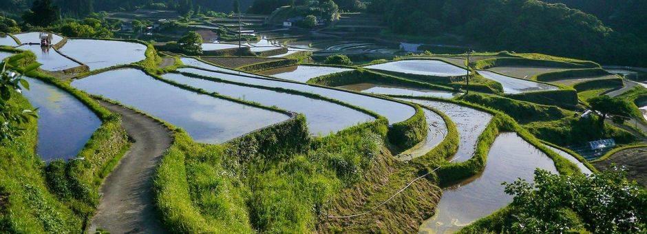 Japan-Kumamoto-rijstvelden