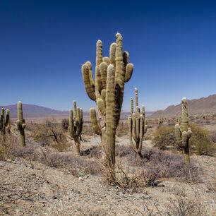 Chili-Los-Cardones-NP-cactus-2_1_432919