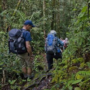 Maleisie-MaleisischBorneo-Sabah-Crocker Range09(8)
