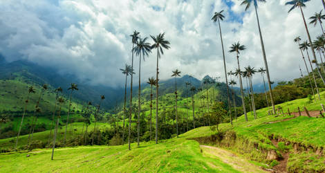 Hoge palmen, Cocora Valley in Salento