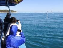 Op zoek naar dolfijnen en zeehonden