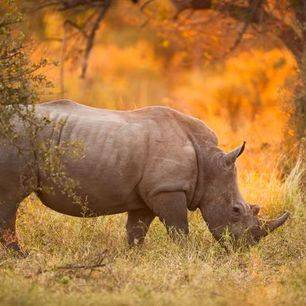 Kenia-LakeNakuru-neushoorn_2_310184