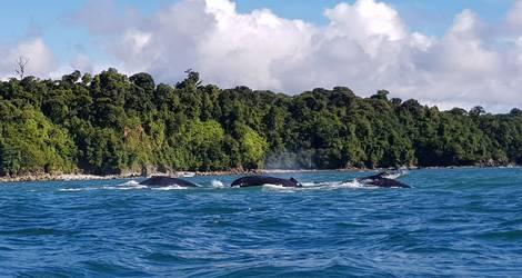 Colombia-Nuqui-walvissen
