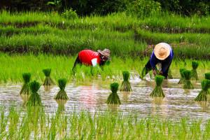 Ervaar het landelijk gevoel in Duong Lam Village