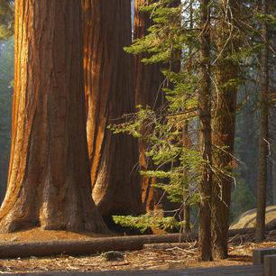 Amerika-Yosemite-National-Park-bos_6_512458