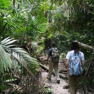 Maleisie-MaleisischBorneo-Sarawak-BakoNationalPark-jungletrekking shutterstock_2312066(8)