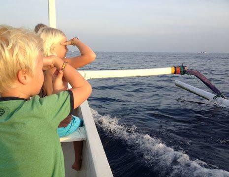dolfijnenspottenbali