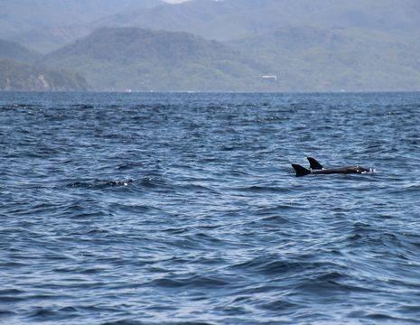 Excursie-Snorkelen-en-dolfijnen-spotten-5(15)
